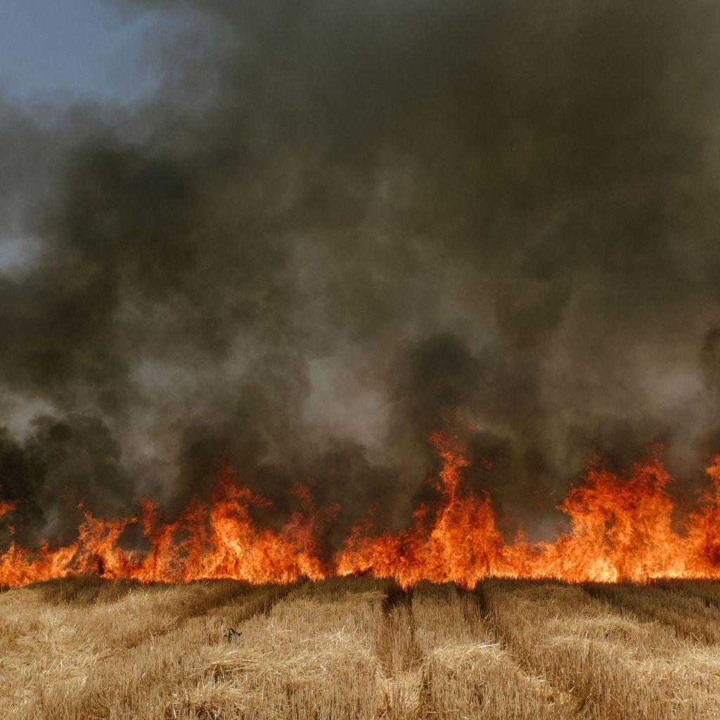 Incendie d'un champ de blé dans l'Etat de Madhya Pradesh, en Inde, photographie de Matthieu Paley