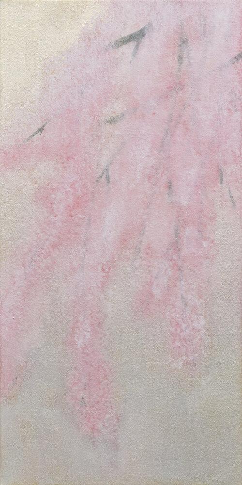 Sakura, le printemps, 2020, TakashiHarada