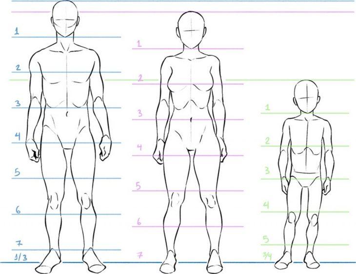 Proportions anatomiques, illustration de Eridey