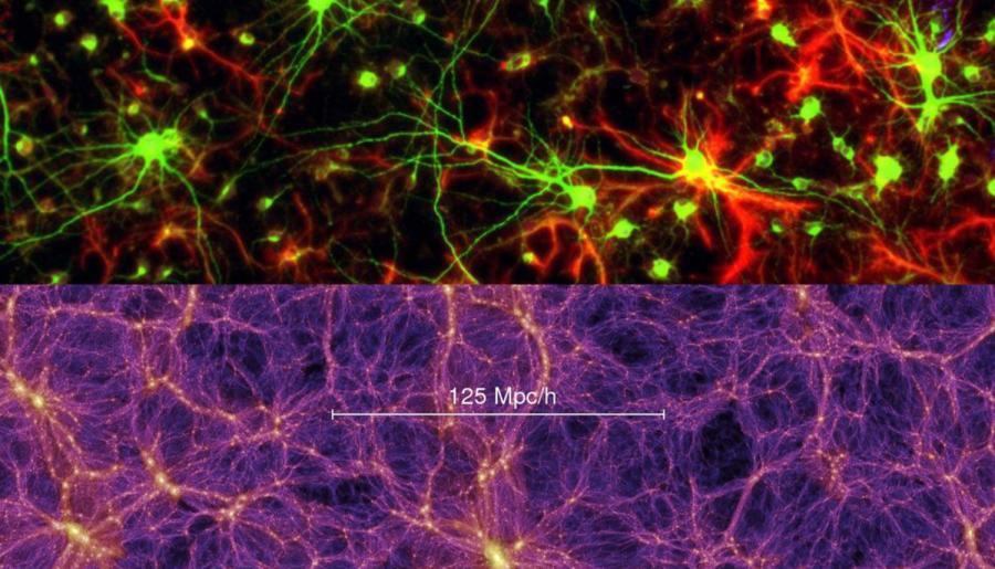 Neurones et cellules gliales, simulation de l'Univers observable
