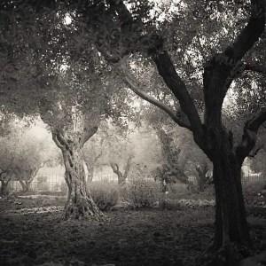 Jardin de Gethsémani, photographie d'Hengki Koentjoro