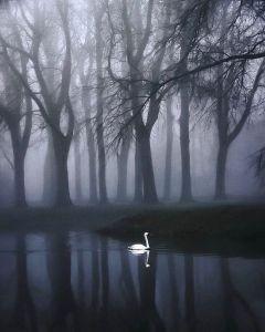 Matin maussade et brumeux, photographie de Karen Claudia