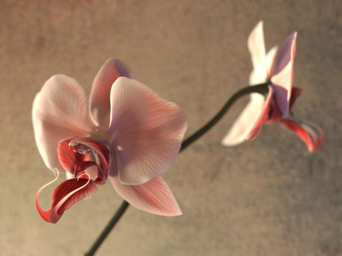 Kado, la voie des fleurs, détail
