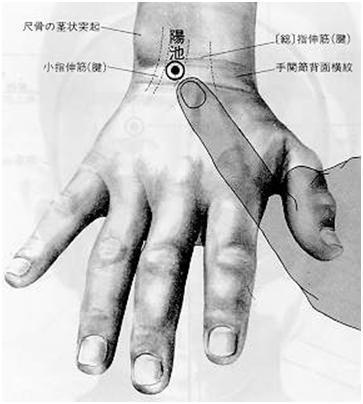 陽池 yáng chí est le quatrième point du méridien du triple réchauffeur.