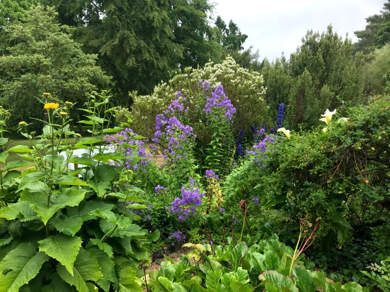 Photograph of a section of the Malahide Castle walled garden, richly populated with flowering plants of varying leaf structures and yellow, purple, blue and white petals foregrounded against taller shrubs and much taller trees of different varieties and textures.
