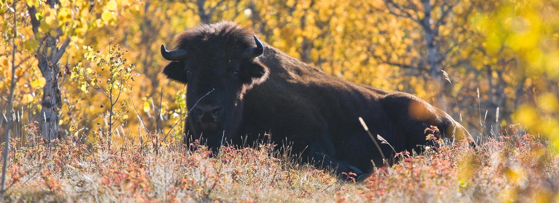 Yukon Tourism Development Strategy