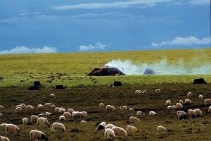 Tibetan Nomads Camp