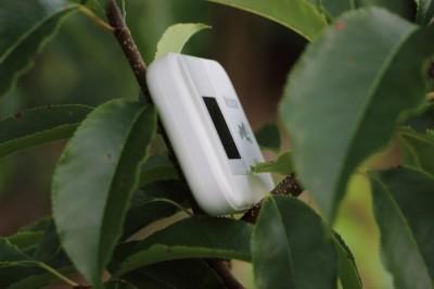 Pocket Hotspot 4G Arbre