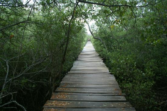 playa-avellanes puente