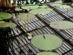The Water Lily House