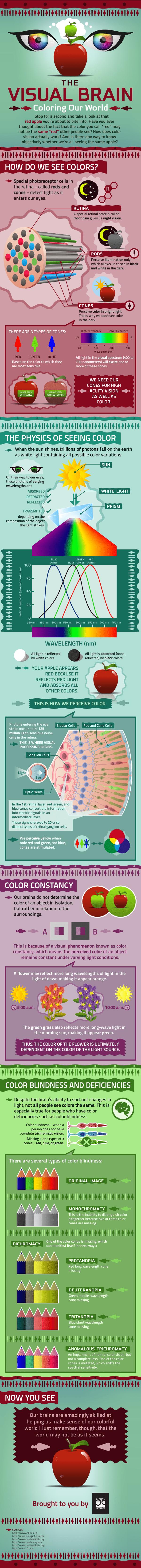 El cerebro visual: coloreando nuestro mundo