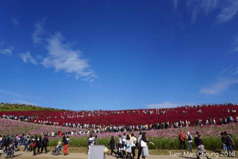 Miharashi Hill!