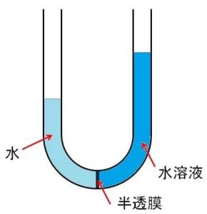 浸透圧U字管
