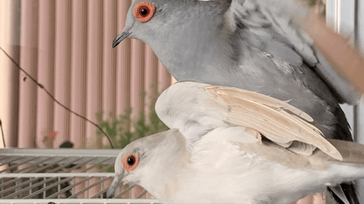 Diamond Dove Care-My Pets, Part 3