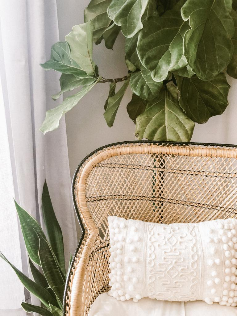 rattan chair with large snake plant in the background, boho design photo