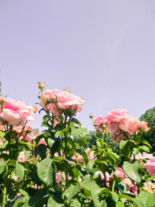 Fernbank-Rose-Staton-Garden-20b