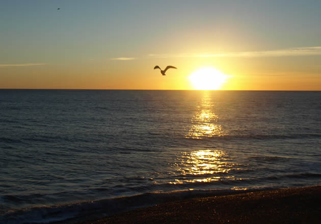 Sunset over the sea with bird