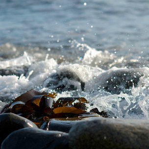 Kelp Wash