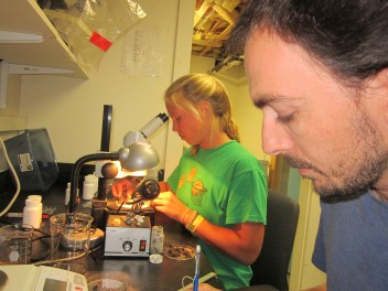 Mentor and mentee sorting samples