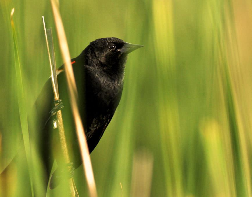 blckbird