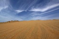 Auf einer Sanddüne