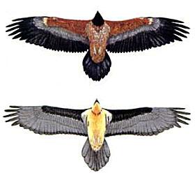 Skizze: Servizio Foreste e Fauna - PAT / www.waldwissen.net