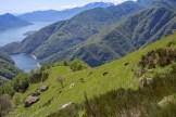 Nera Verzasca Ziegen vor Lago Maggiore