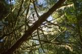 Regenwald im Pacific Rim National Park