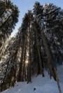 Die Sonne strahlt in den frisch verschneiten Märchenwald