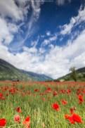 Mohnblumenfeld und spektakuläre Wolken