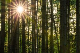 Seltener Gast diesen Frühling: die Sonne