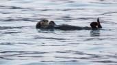 Otter (Alaska)