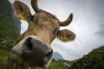 Begrüssungskommitee auf der Alp