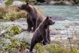Posierende Bären