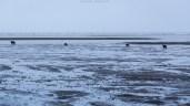 Bären am Strand (Alaska)