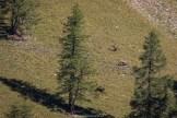 Zwei Hirschstiere begegnen sich auf einer Bergwiese