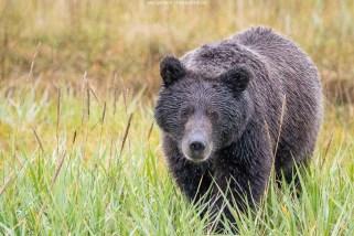 Neugieriger Bär
