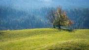 Schöner Herbstbaum - bald lässt er wohl die letzten bunten Blätter fallen...