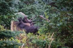 Gut getarnt säugt die Bärenmutter ihr Junges