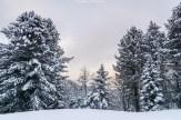 Nebelstimmung im Naturpark Gantrisch
