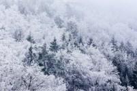 Vom Nebel gefrorene Bäume