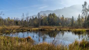 Herbst am Moor