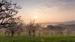 Morgenstimmung & Kirschblüten