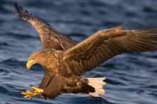 Eagle Action!