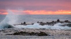 Seebären auf einem Felsen etwas weiter im Meer
