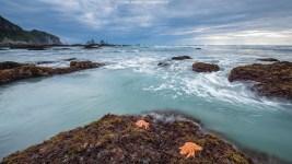 MIt zunehmender Ebbe kommen Seesterne zum Vorschein