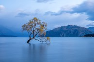 Wanaka Tree Blue Hour