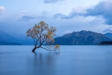 Kormorane auf dem Wanaka Tree