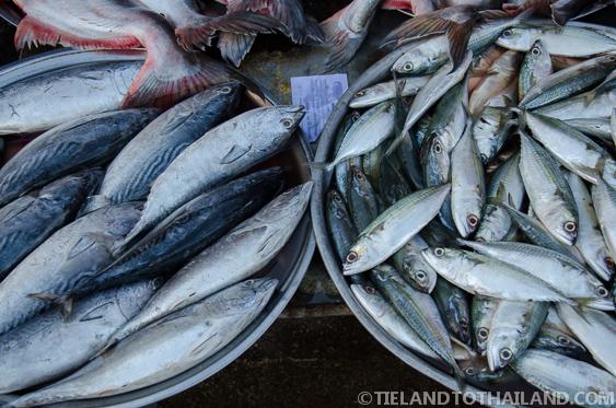 Fish at the Rong Kluea Border Market