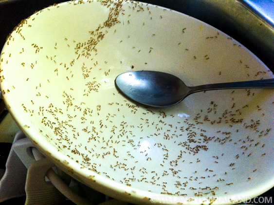 The Battle Against Thailand's Bugs - Tieland to Thailand